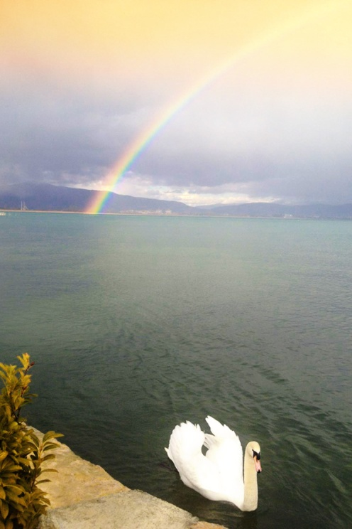 Swan and Rainbow at Lake Ohrid