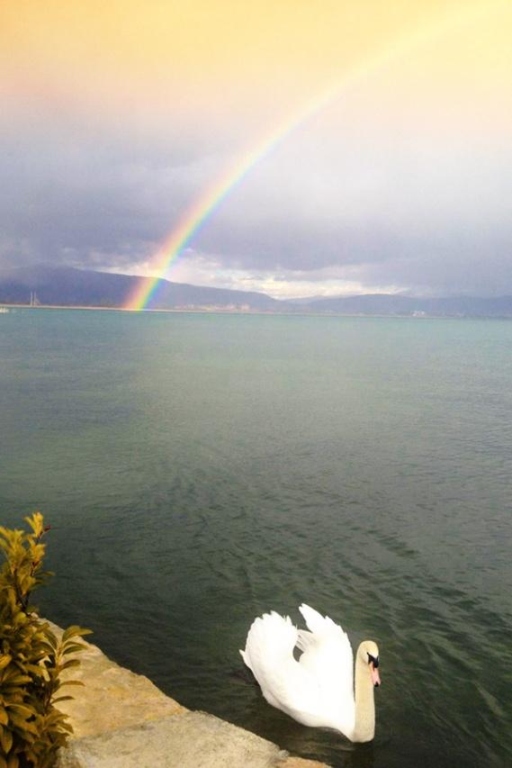 Swan and Rainbow at Lake Ohrid